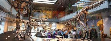 Natural History Museum Free Admission Tuesday